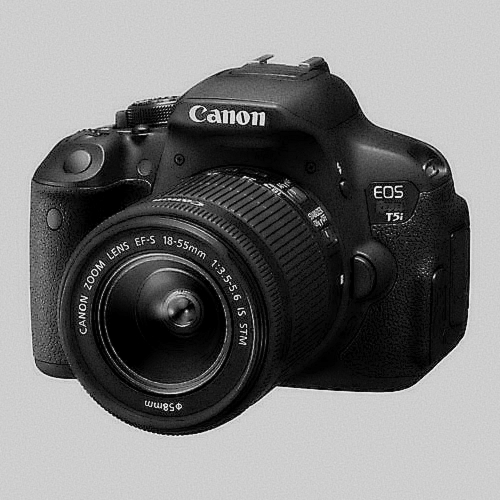 Best affordable camera for wildlife photography | 2021