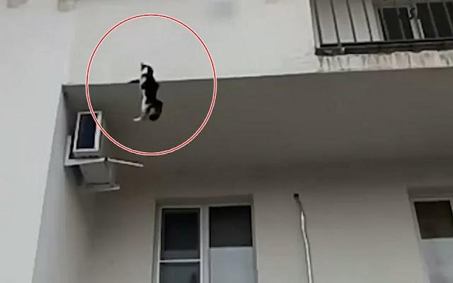 В Москве женщина выбросила из окна многоэтажки десять котов