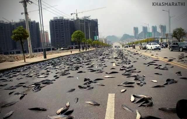 या देशात पडतो चक्क Fish Rain..! || Marathi special