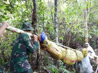 Satgas R 301/Pks Bantu Evakuasi Jenazah Tertimpa Pohon