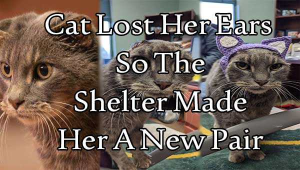 Cat Lost Her Ears - So The Shelter Made Her A New Pair