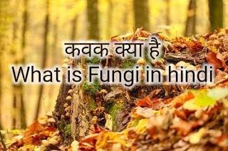 कवक क्या है What is Fungi in hindi