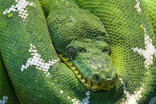 cerita kisah mistis nyata terbaru cerita ular jadi jadian