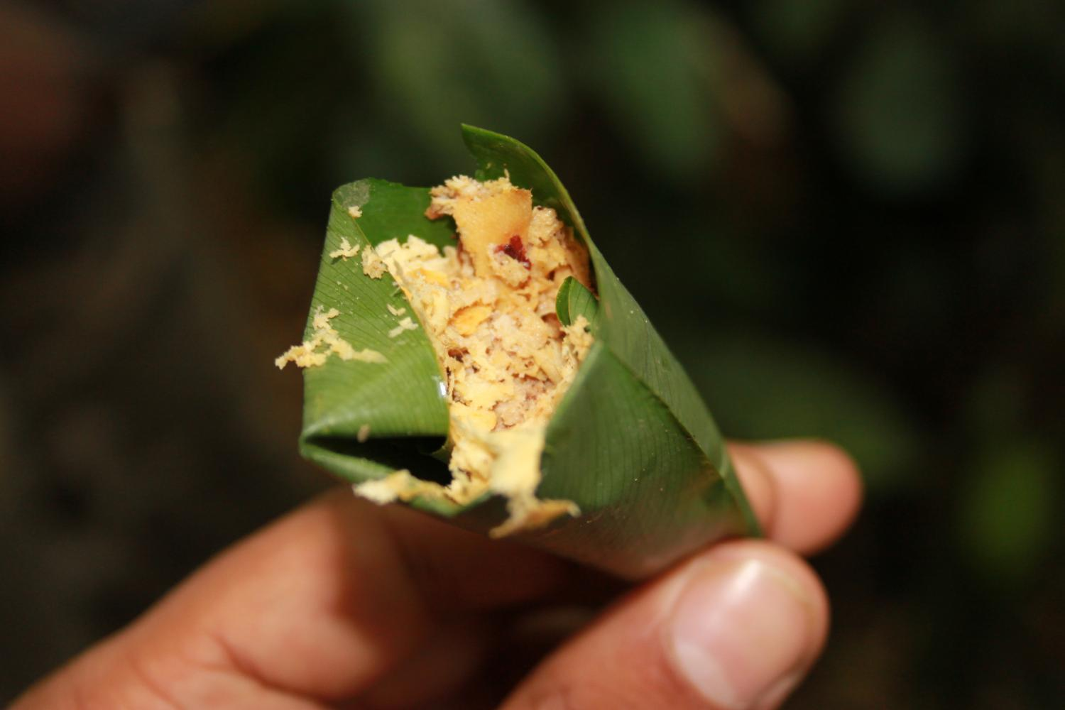 Tracing The Path Of Pygmies Shared Knowledge Of Medicinal Plants