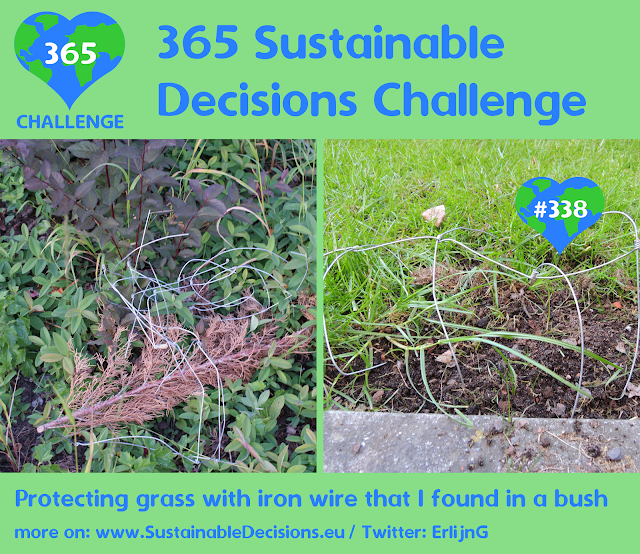 Protecting grass with iron wire that I found in a bush, upcycling, sustainable living, climate action, sustainability