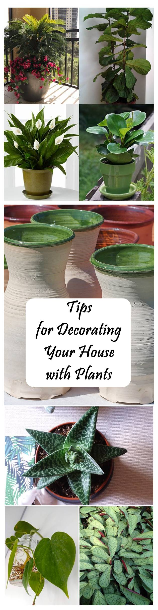 Tips for Decorating Your House with Plants