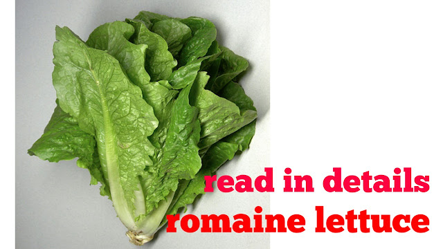 romaine lettuce |what is romaine lettuce ? Know in this article