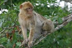कहानी  : एक बन्दर और मगरमच्छ  Panchatantra stories: a monkey and a crocodile-www.kaise-hoga.com