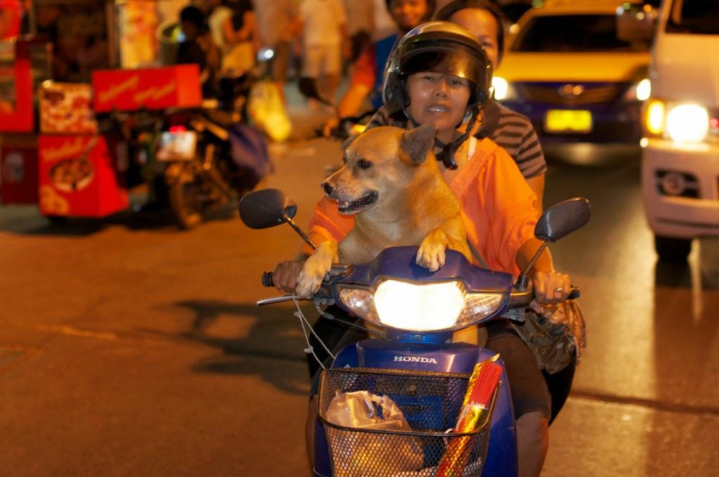 Собака в скутере Таиланд