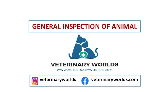 GENERAL INSPECTION OF ANIMAL
