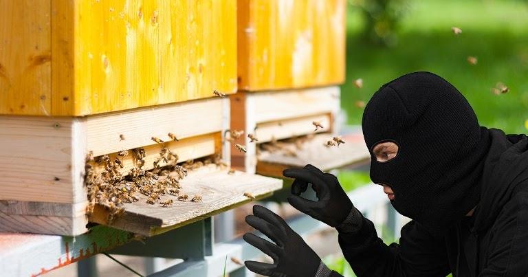 Συνελήφθη ο δράστης δύο κλοπών μελισσιών στην Αγιά