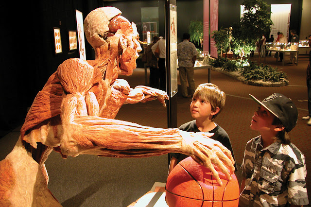 Body Worlds Vital_basketballer #thelifesway