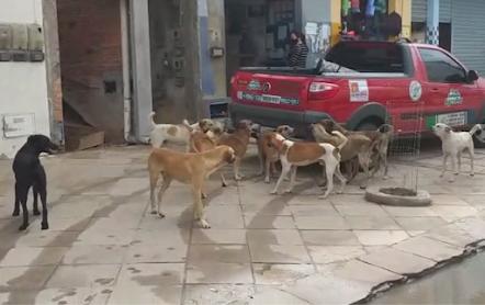 Miguel Calmon: Cães soltos nas ruas colocam em risco pedestres e motoristas – Condutores reclamam de ataques