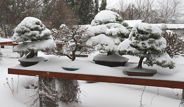 Bonsai during winter - How to overwinter your Bonsai from December till April
