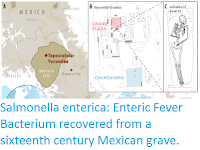 http://sciencythoughts.blogspot.com/2017/03/salmonella-enterica-enteric-fever.html