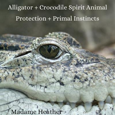 Alligator Medicine