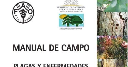 Plagas y enfermedades de eucaliptos y pinos descargar for Libro viveros forestales