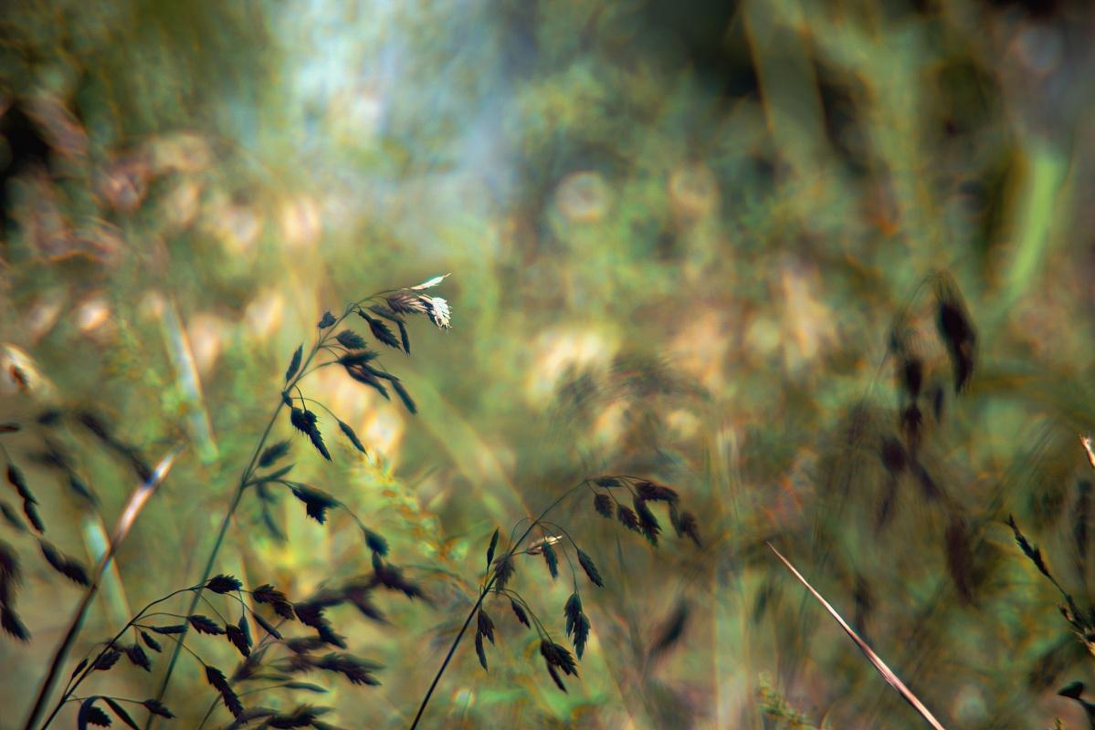 Offenblendiges von meiner Blumenwiese (1)