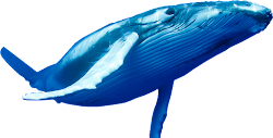 whale transparent whales pic background clipart resolution health clip power diabetes type fgxpress strips solar fight conditions sample intro ia