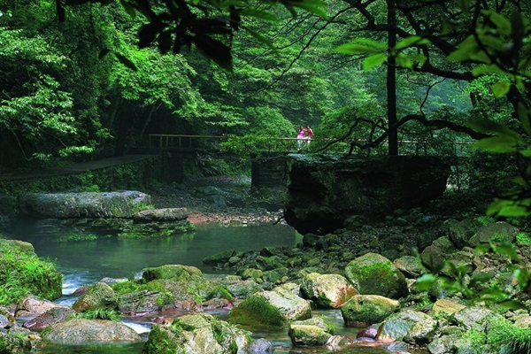 ลำธารแส้ทอง (Golden Whip Stream) @ www.zhangjiajietravelclub.com