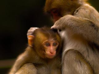 Monyet Lebih ber-etika dari Doktor