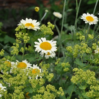 Pflanzenkombination in Limonengelb