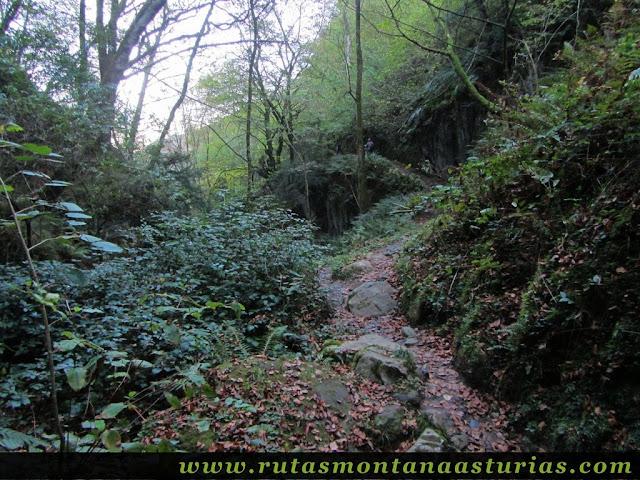 Ruta Pienzu por Mirador Fito y Biescona: Sendero en la Biescona