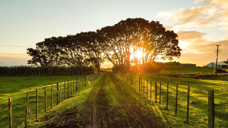 Por el cepo y las retenciones cae el precio de los campos