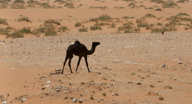 ناقوس الخطر يدق: المملكة العربية السعودية مهددة بالعطش,اخبار السعودية