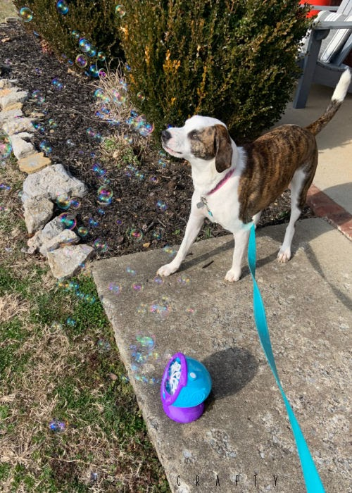 Bubbles blowing from a machine with dog chasing them.