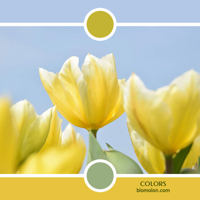 variedad_en_color_color_53