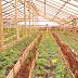 குறைந்த நீரிலும் விவசாயம் புதிய தொழில்நுட்பம் || farming in low water_Tholilnutpam..!