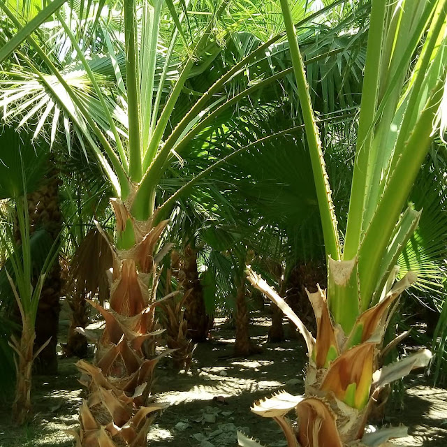 تركيب عشب طبيعي في جدة
