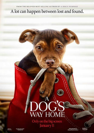 A Dog's Way Home 2019 BRRip 720p Dual Audio In Hindi English