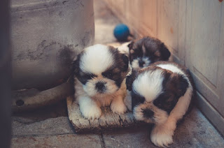 Top 60 Dogs images beautiful puppies You really like it.