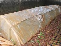 Cara Membibitkan Cabai Merah Dan Cabai Rawit Agar Tumbuh Dengan Bagus Dari Bijinya