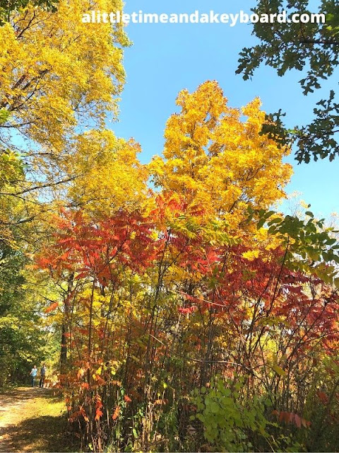 Brilliant blaze of fall colors at Lincoln Marsh in Wheaton, Illinois