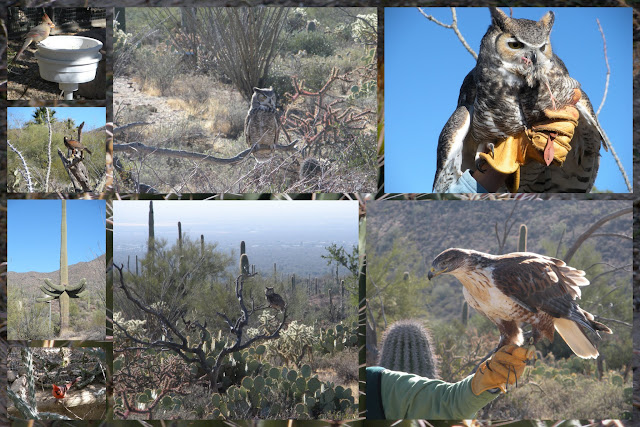 Things to Do in Arizona - Sonora Desert Museum
