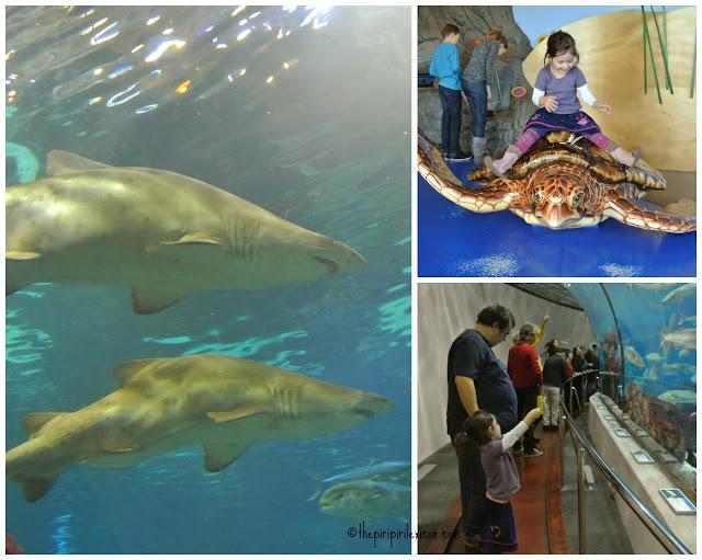 Barcelona's aquarium