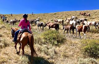 hevosajoa Idahossa