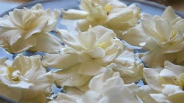 Floriografía: cuando las flores susurraban al oído