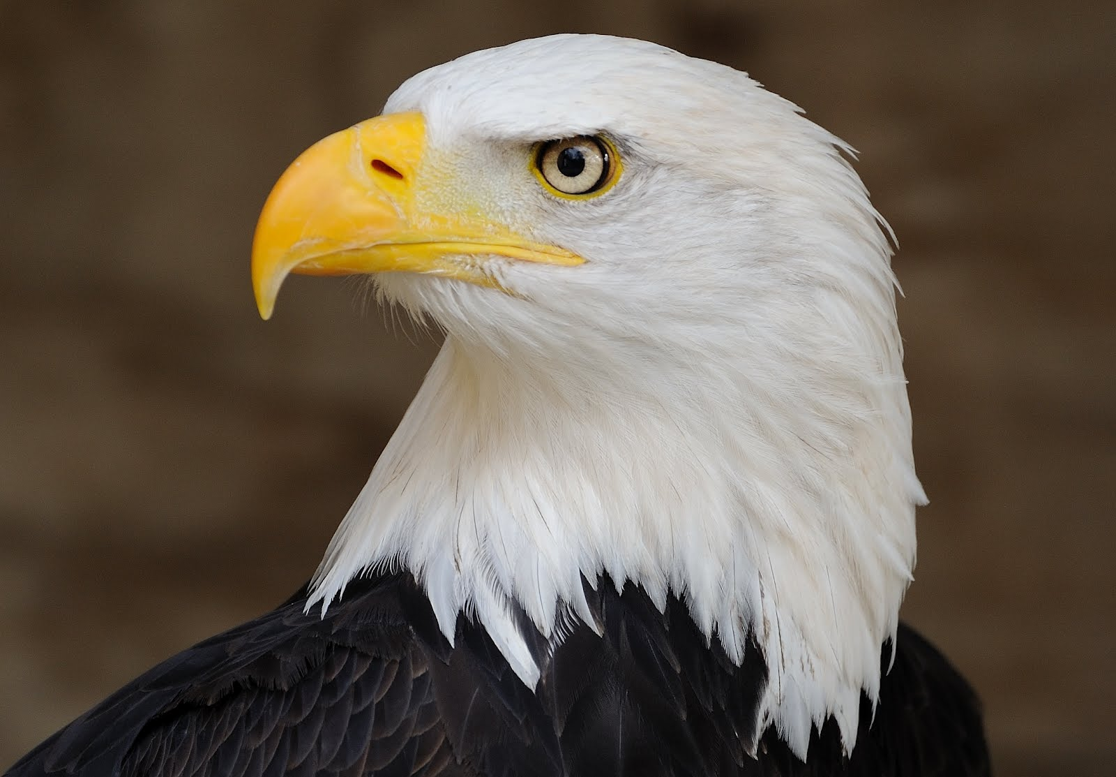 eScienceCommons: Democracy works for Endangered Species Act