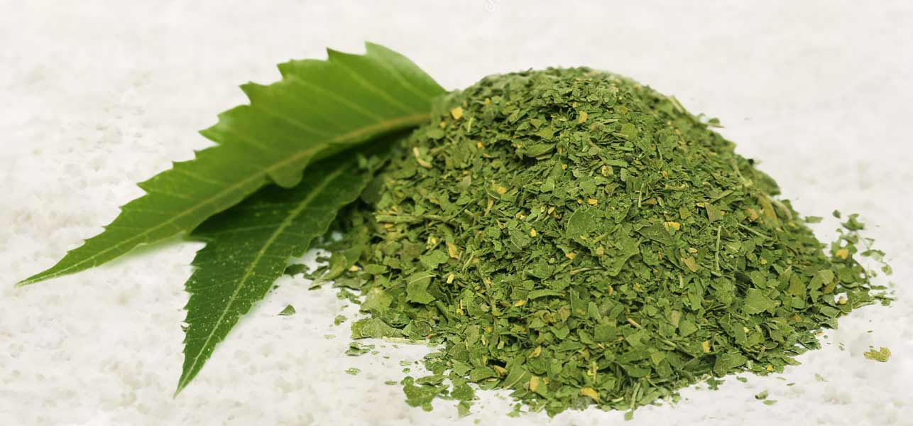 10 Amazing Uses of Neem Powder