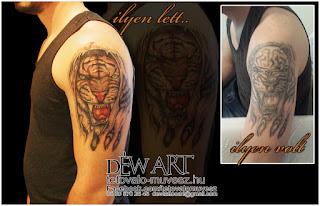 Déw Art, Tigris, tetoválás, szeged, váll tetoválás, szegedi tetoválás, takarás, tetoválás javítás