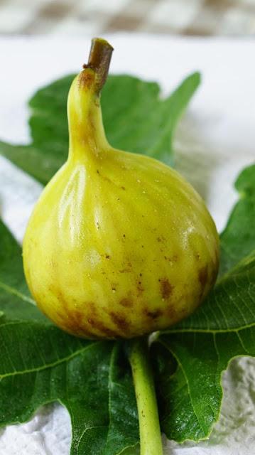 PRETA DE PORTUGAL Figs