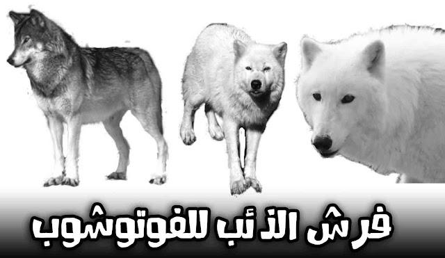 تحميل فرش الذئب فوتوشوب