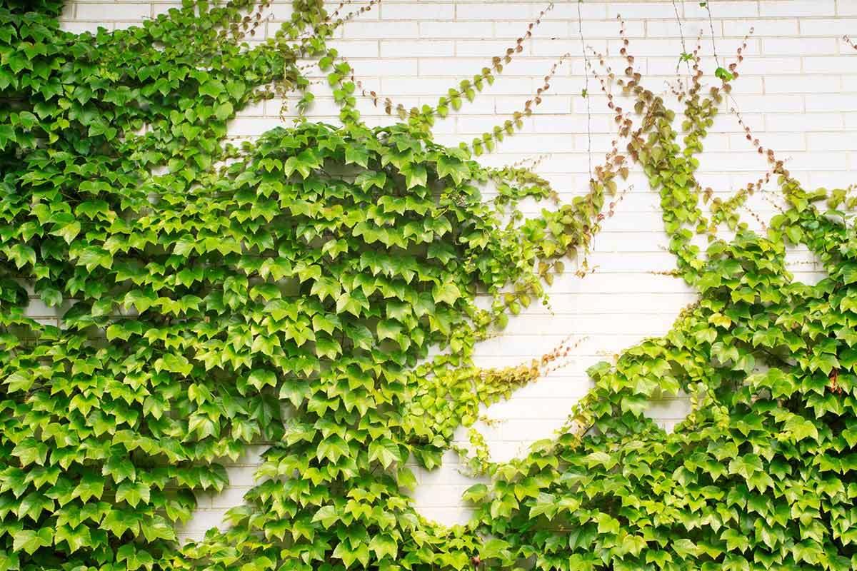 Climb a Wall ! Garden Bible