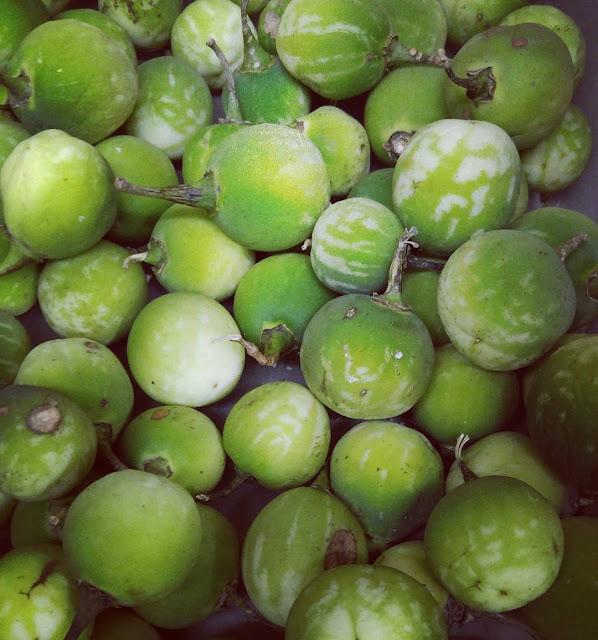 Fruto cuatomate Puebla