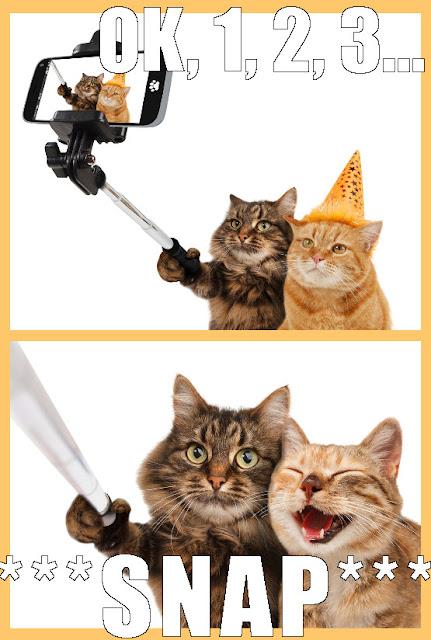 selfie cats