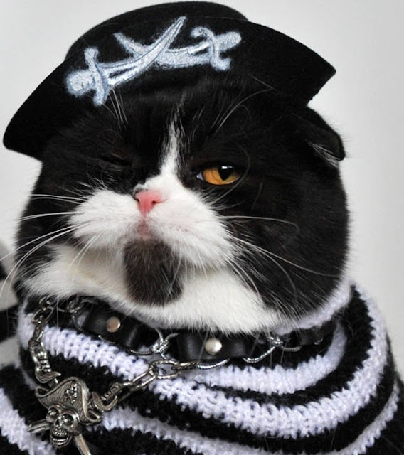 Alguna vez viste el gato del capitán Barbosa